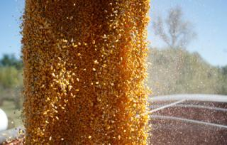 Brazil Corn Exports Up 388% in February Compared With 2015