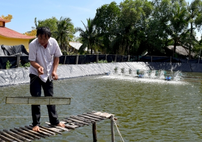 Organic shrimp farmers protect mangrove forests